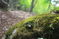 Cannabinoid synthetics and medicinal use picture of moss